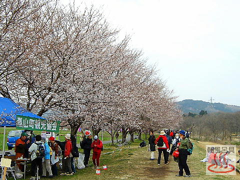 桜並木の土手の写真